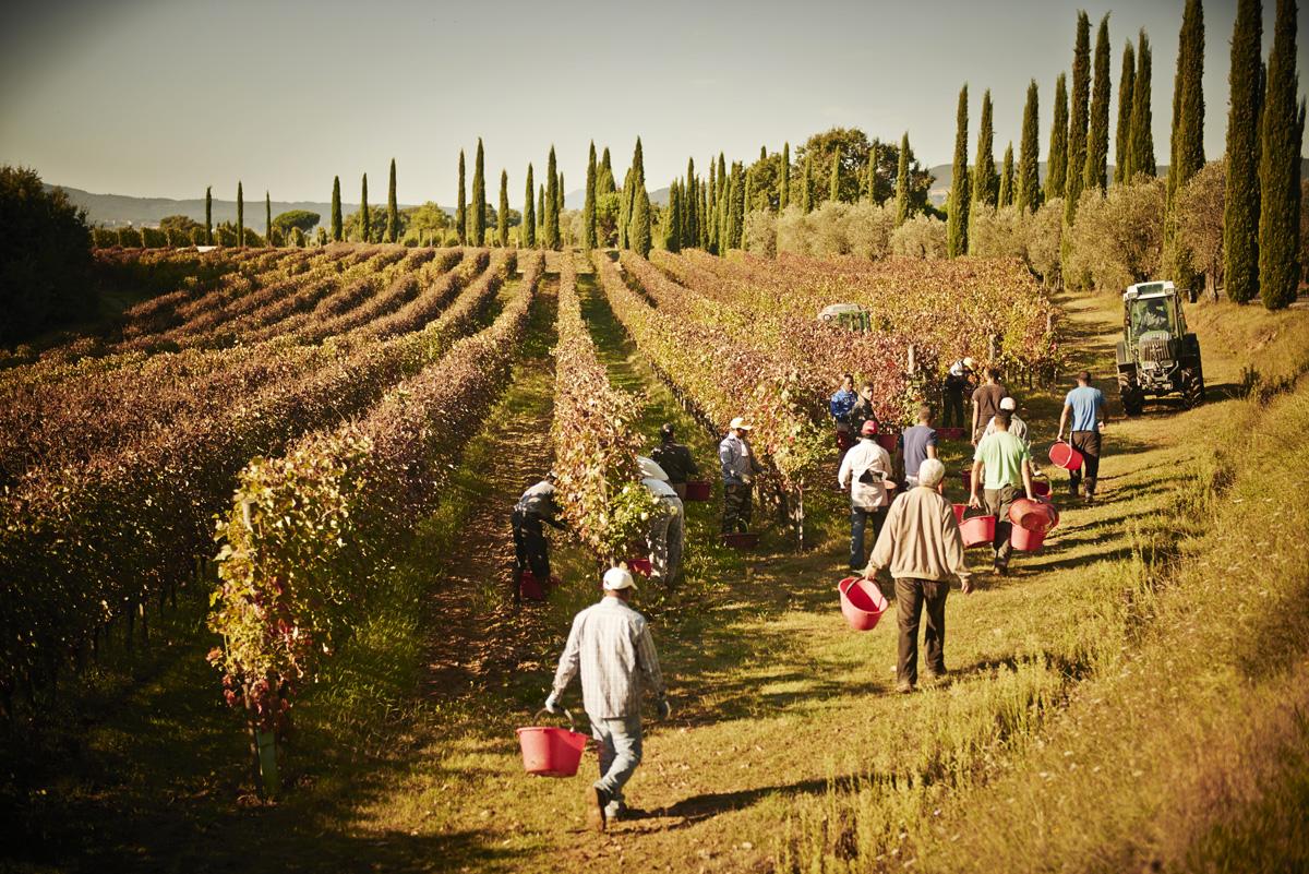 Bindella Vino Nobile di Montepulciano